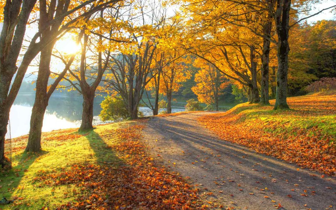 Changing Seasons Landscaping
